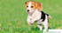 Photos of Honey Pet Zone Pets Sales Accessories Puppies Appughar in Visakhapatnam Vizag